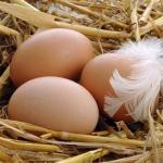 Всё, что нужно знать о яйцах