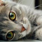 Что происходит в доме, где живут кошки