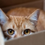 Ученые объяснили стремление кошек прятаться в коробках