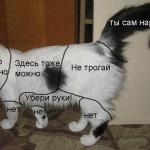 Британские ученые выяснили, как нужно гладить кошек