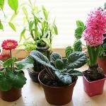 Комнатные растения, которые притягивают деньги