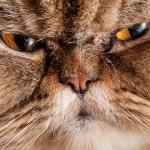 Повышенное чувство тревоги у людей может возникать из-за кошек