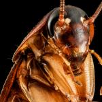 Как кусают тараканы