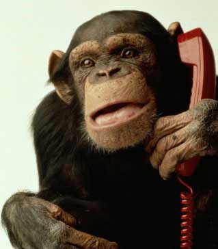 monkey_with_telephone