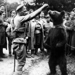 Как уральский медведь сражался с немцами в Первую мировую войну