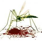 Как лечить укусы комаров: эффективные и простые средства