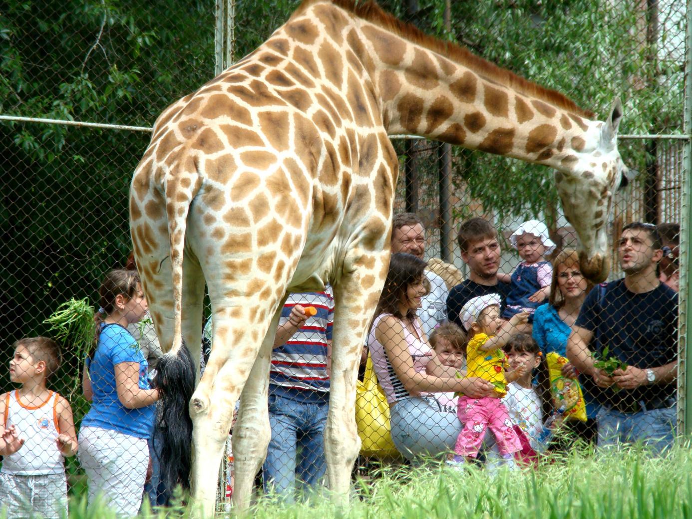 Билеты вростовский зоопарк подорожают вдвое