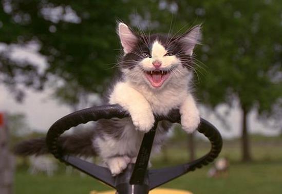 Бешеный кот напал натрактор вРостовской области