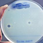 Ученые нашли новый сверхмощный антибиотик внутри организма человека