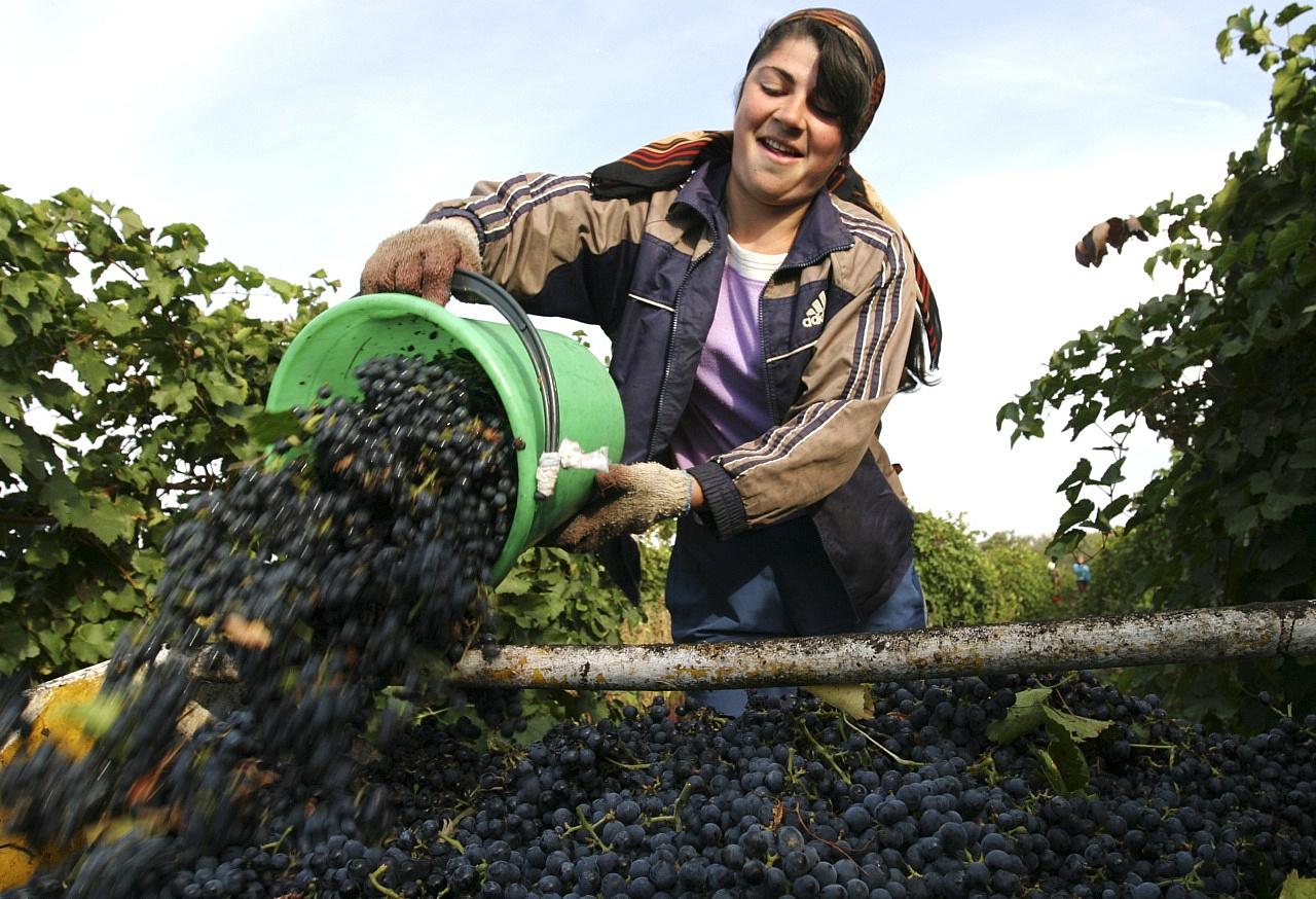 Ростовская область вошла врейтинг известных мест для винного туризма