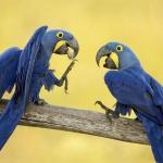 Почему одни попугаи разговаривают, а другие — нет?