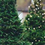 Выбираем елку к Новому году