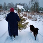 Как убрать елку после праздников быстро и с пользой