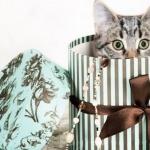 Россиянам запретят дарить детям котят