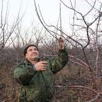 Зимняя обрезка плодоносящих яблонь — полезные советы