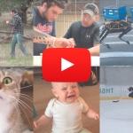 Самые смешные видео 2016 года