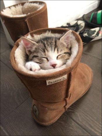 sleeping-kitten-010