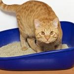 Ученые опровергли миф о психических проблемах владельцев кошек