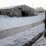 Две трети молока в российских магазинах - лишь смесь растительных жиров с водой