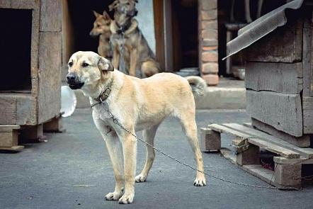 ВРостове ищут сооружение для Центра безнадзорных животных