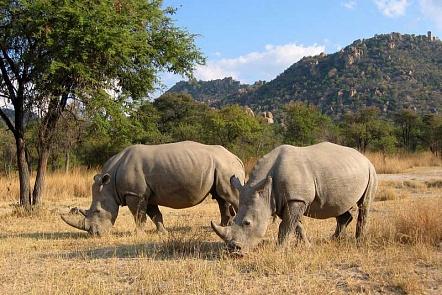 Вростовский зоопарк могут привезти 2-х  носорогов изИзраиля