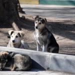 Верховный суд вынес смертный приговор всем бездомным животным России