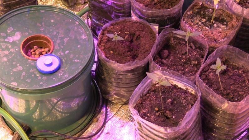 ВРостовской области мужчину задержали законтрабанду марихуаны вкрупном размере
