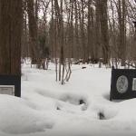 Где собака зарыта: кладбища животных смертельно опасны для людей