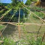 Опоры для подвязки винограда: полезные советы