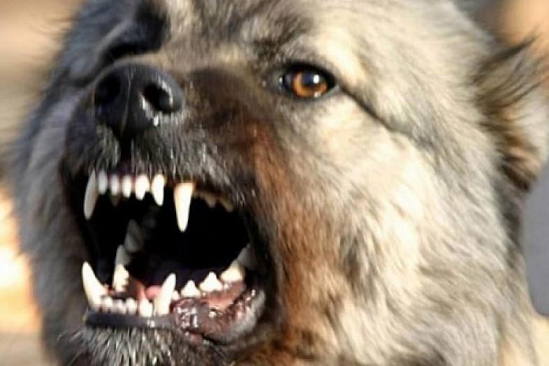ВРостовской области мужчина забил палкой бешеную собаку, защищая дочь