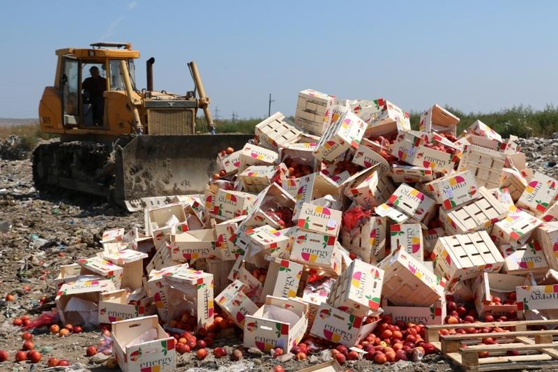 ВРостовской области уничтожили практически 10 тонн зараженных томатов икабачков