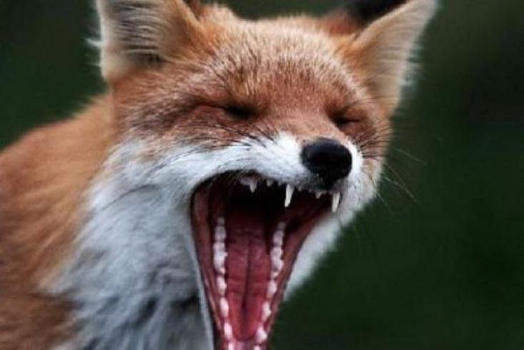 ВРостовской области мужчина насмерть забил палкой бешеную лису