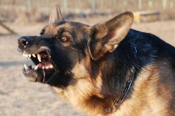 Гражданин  Ростовской области натравил собаку нафельдшера «скорой помощи»