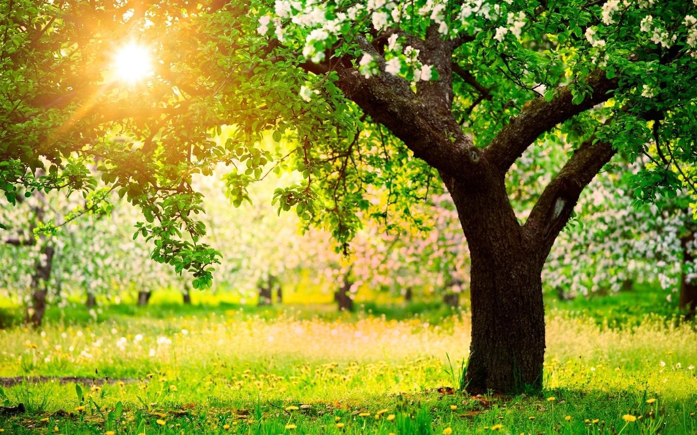 Ввыходные дни вАрхангельской области предполагается тёплая погода