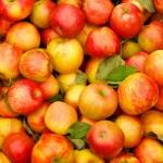 Как правильно выбрать яблоки?
