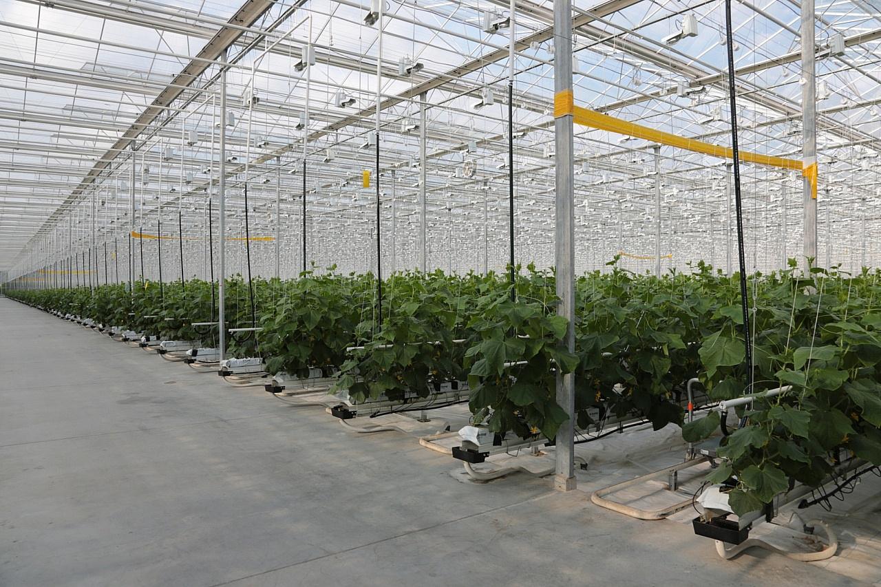 Выращивание овощей на предприятии 449