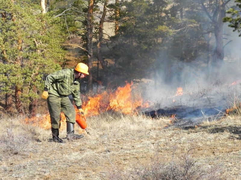 Вертолет МЧС вылетел тушить мощный пожар всосновом питомнике Ростовской области