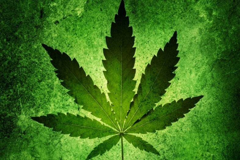 Молоко матери марихуана скрыть марихуану при анализе мочи