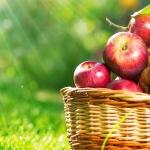 Яблочный Спас: обычаи, традиции, обряды, приметы