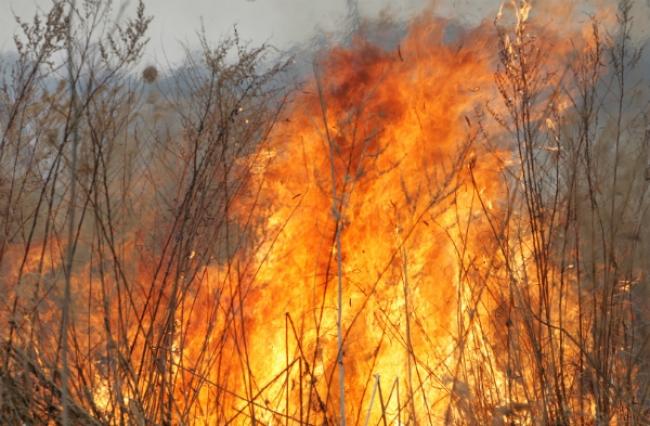 Пожар вдеревне под Ростовом привел квозгоранию степи