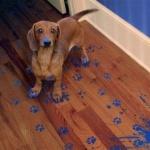 От каких болезней может защитить собака