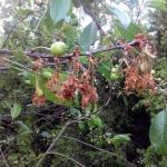 Болезни косточковых плодовых культур вишни и абрикоса — советы профессионалов