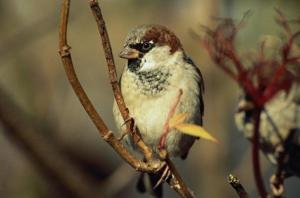 ВРостовской области выявлена вспышка птичьего гриппа