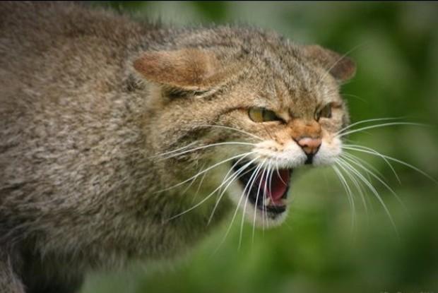 Бешеный кот покусал владельца попути в поликлинику вРостовской области