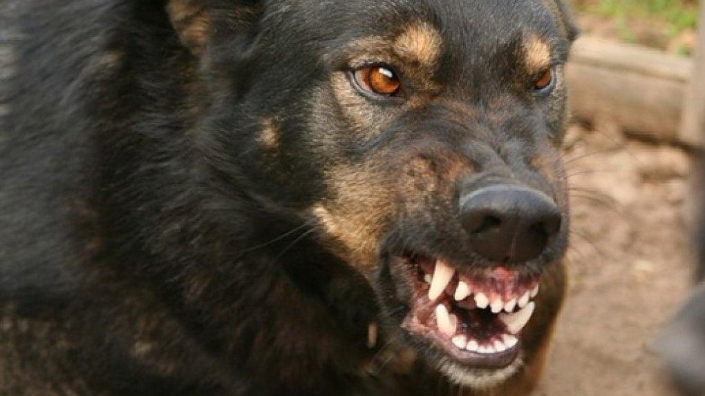 Подростка изРостовской области едва нерастерзала стая бездомных собак