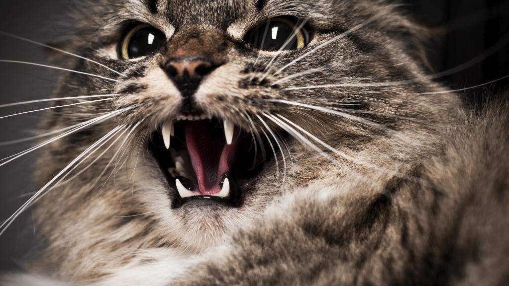 Зараженная бешенством кошка покусала семью вРостовской области