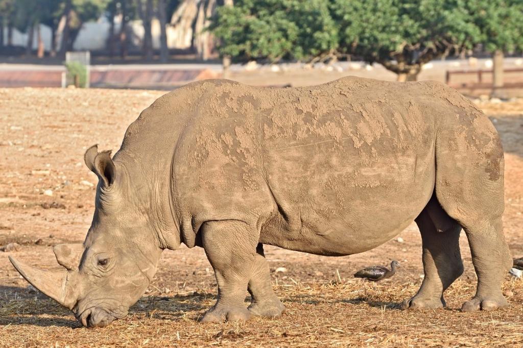Вростовский зоопарк прибыли белые носороги изИзраиля