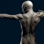 Человек может прожить без 7 своих органов – ученые