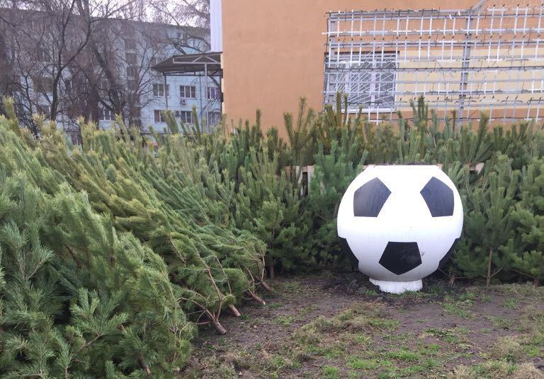 Преступную реализацию елок остановили вРостове около мяча, установленного кЧМ