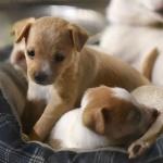 Ученые предупредили о новой передающейся через щенков инфекции